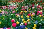 flores do campo 8