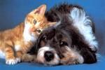 Cães-e-gatos-vão-ganhar-hospital-em-São-Paulo-Imagem-Como-Cães-e-Gatos