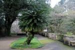Estudandes adotam árvore no Jardim Botânico da Universidade de Coimbra