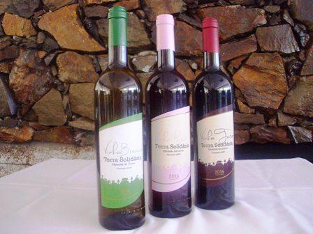 vinho_terra_solidaria_1