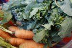 horticultura-organica