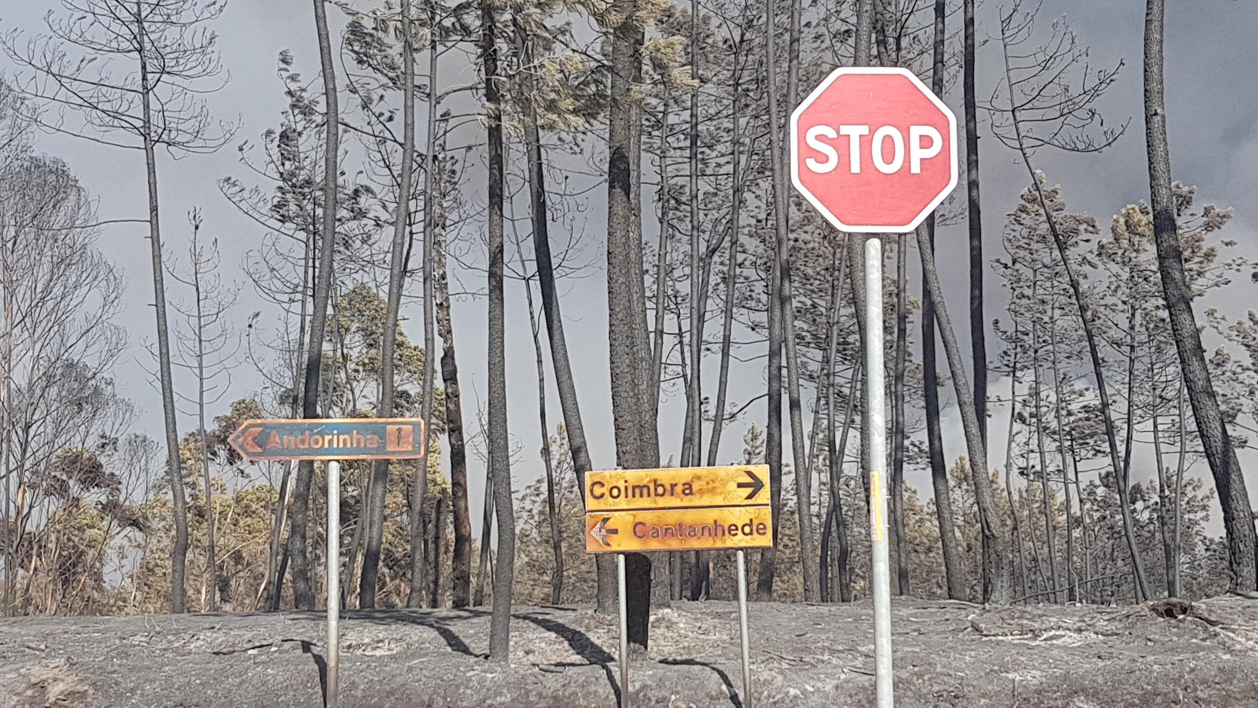Resultado de imagem para Avaliação do impacto dos fogos com Turismo do Centro