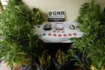 GNR Coimbra - Apreensão