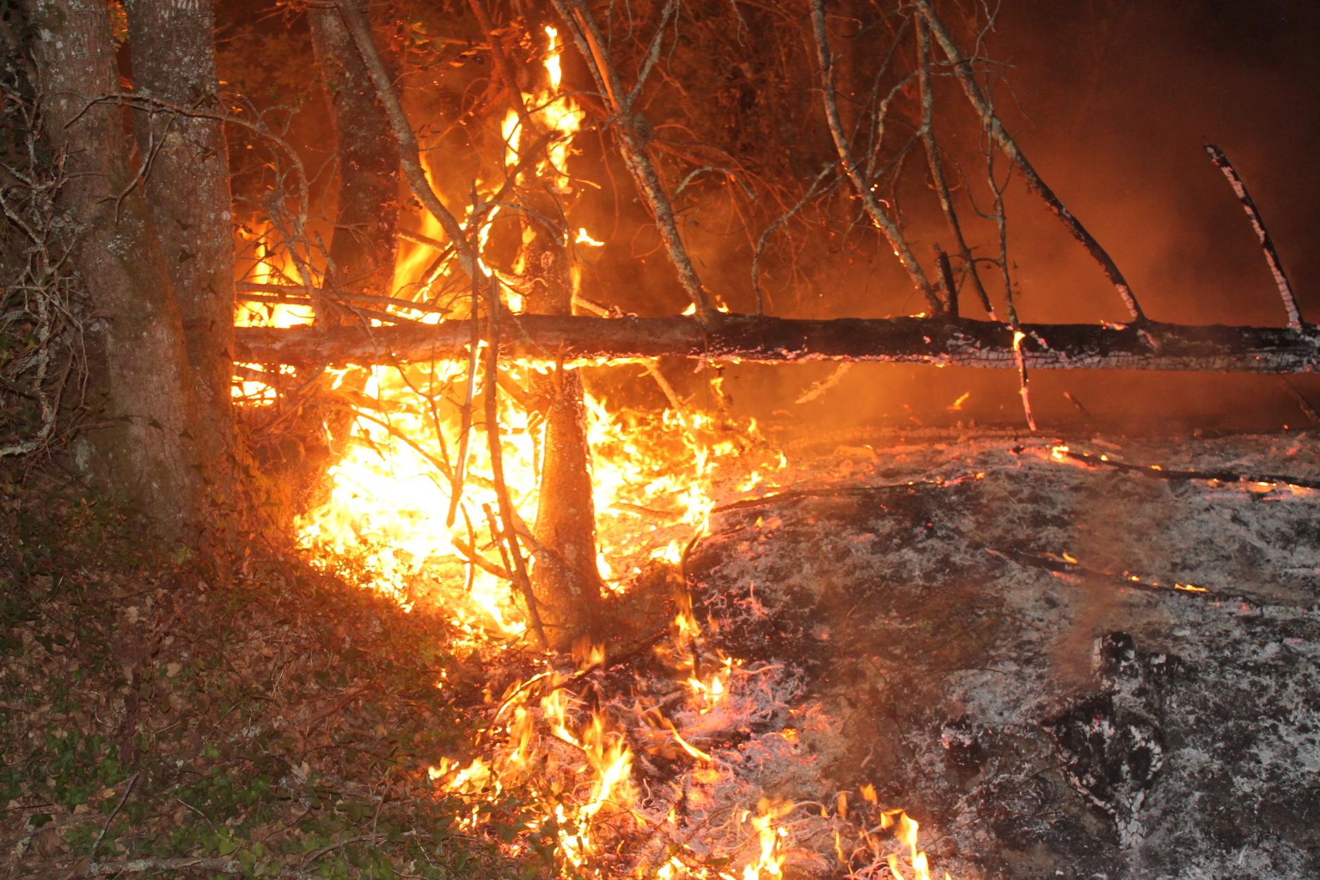 Cinco principais incêndios em Santarém, Aveiro, Coimbra, Lisboa e Viseu