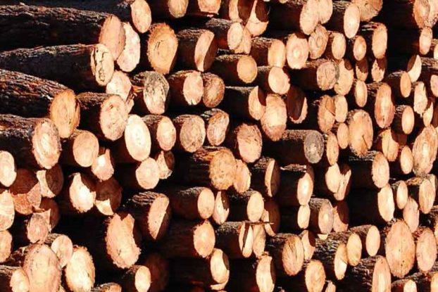 serração madeira