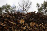 madeira queimada