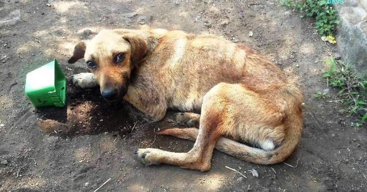 Resultado de imagem para Número de animais abandonados está a aumentar em Portugal